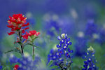 Blue and Red Wildflowers