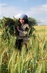 Child Carrying Bundle of Grain