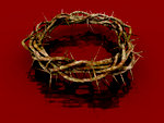 Crown of Thorns - Red